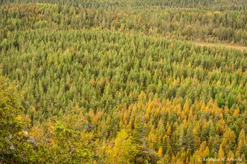 9. Karhunkierros Trail_Día 5. Finlandia
