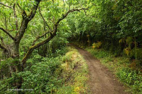 Ruta Cruz de Tejeda-Las Lagunetas_2014.05.24